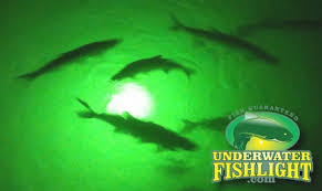 portable underwater fishing lights portable underwater fishing lights deanlevin info