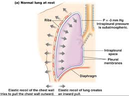 Anatomy And Physiology Of Copd Associate Degree Nursing Physiology Review