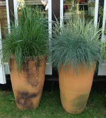 tall terracotta pots with amazing grasses what a combination