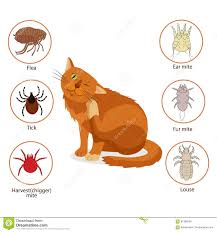 cat parasites what to know about feline parasites pet skin and