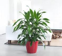 Easy To Care For Indoor Plants Indoor Plants Nyc Office And House Plant Delivery Service In New