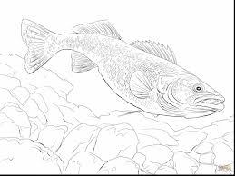 walleye fish coloring coloring eson