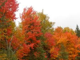 fall colours algonquin park stock photo image 57491616