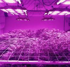 best led grow lights for marijuana best cheap indoor marijuana led grow light reviews 420 light guide