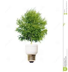 tree in light bulb royalty free stock images image 10823519