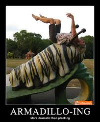 Armadillo Meme - dead armadillo ing more dramatic than planking funny pins