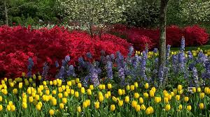 color garden cool color garden ideas color theme garden ideas