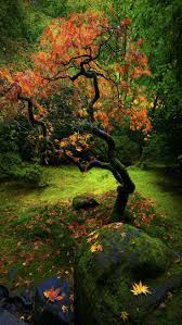 ray nesci bonsai nursery home 54 best trees images on pinterest nature landscapes and forests