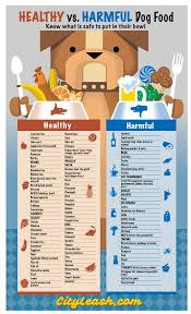best 25 toxic foods for dogs ideas on food for