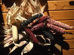 indian corn hgtv