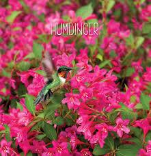 Pink Spring Flowering Shrubs - proven winners u2013 flowering shrubs u2013 proven winners u2013 flowering shrubs