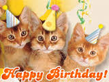 funny cats birthday ecards american greetings