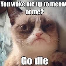 Image 9 Best Grumpy Cat - 9 best grumpy cat images on pinterest grumpy cat grumpy cat