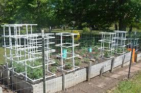 easy diy tomato cucumber u0026 squash pvc pipe cage raise your