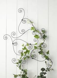 great plants for your indoor trellis designs helpful tips