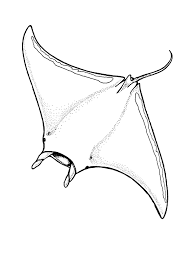 stingray coloring pages nemo stingray coloring pages fish