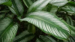 native pot plants homelife top 15 indoor plants