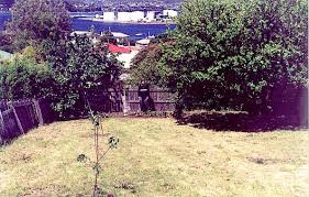 Apple Tree In My Backyard An Apple Tree In My Temperate Garden Dom U0027s Kitchen Garden