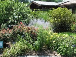 inspiring landscaping bushes and shrubs design ideas u0026 decors