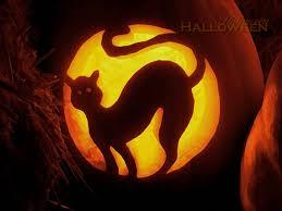 halloween cat wallpaper all things halloween wallpaper