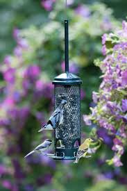 outstanding how to attract birds to your bird feeder 44 how to