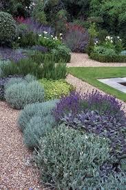 430 best drought tolerant gardens images on pinterest