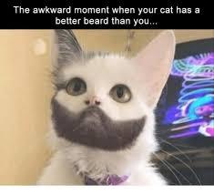Cat Beard Meme - the awkward moment when your cat has a better beard than you beard