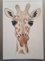 best 25 giraffe drawing ideas on pinterest cute giraffe drawing