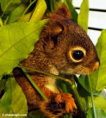 Squirrel In Basement by Baby Squirrel Shana Logic Blog