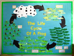 life cycle craft and coloring page crafts and worksheets for
