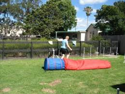 Backyard Agility Course Dog Sports Dog Training For Wingham Taree And Manning Valley