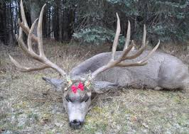 5 year old arkansas breaks world record for largest deer