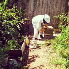 what is a beekeeping service bee2bee honey collective
