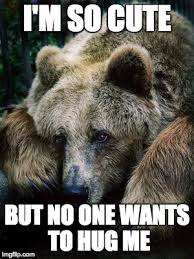 Sad Bear Meme - sad bear imgflip