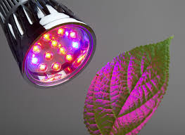 Colored Christmas Lights by Red Light Or Blue Light For Plants U2013 Effects Of Red And Blue Light