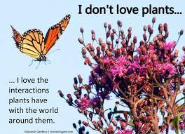 earth tones native plant nursery t h e d e e p m i d d l e the deeper debate about native