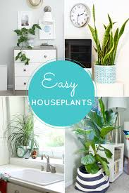 easy houseplants 4 indoor plants green up your spaces modern