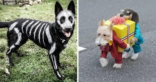 Halloween Costumes Husky Dog Dog Costumes Halloween Photo Album Dog Halloween Costumes Dog