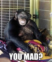 Chimp Meme - you mad travis the chimp you mad quickmeme