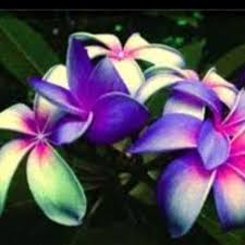 The Most Fragrant Plants - very fragrant flowers the most fragrant flowers in the world quora