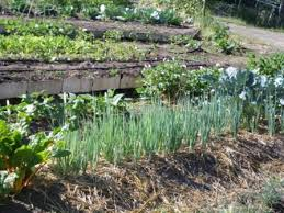 vegetables idaho landscapes and gardens
