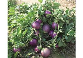 native plants of india food crops in india aglasem schools