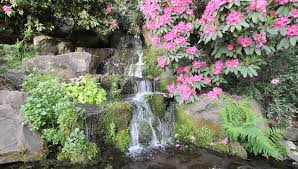 Waterfall In Backyard Waterfall In Backyard Garden With Ferns Moss And Pink Rhododendron