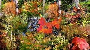 forest fall forests autumn color mountains trees leaves forest