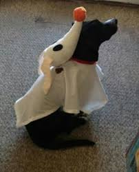 Ghost Dog Halloween Costumes 21 Halloween Costumes Costumes