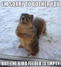 Funny Bird Memes - squirrel bird feeder funny meme funny memes