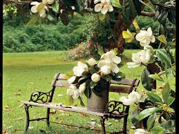small trees in small gardens about the garden magazine the complete guide to magnolia trees southern living