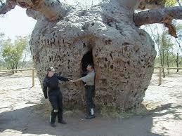 stuffs top 10 unique trees around the world