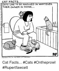 Cartoon Cat Memes - cat facts cats like to be involved in whatever their owner is doing