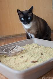 kitty litter cookies recipes food recipes here